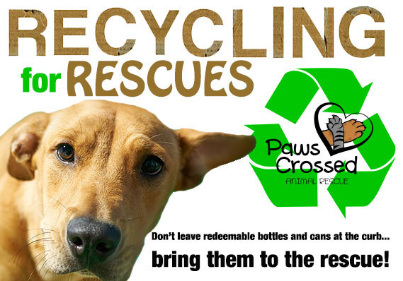 paws crossed dog rescue