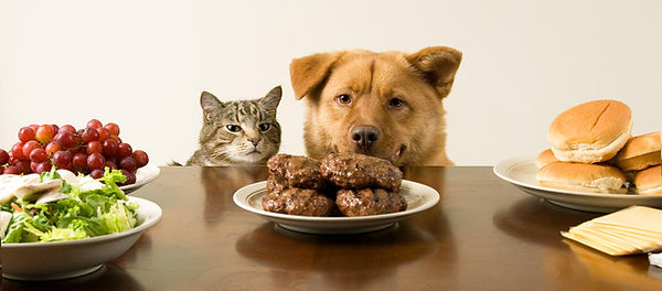 dog-and-cat-eating-table-scraps.jpg