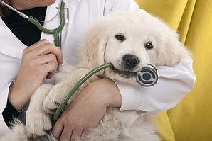 Dog-during-vet-visit_resized.jpg