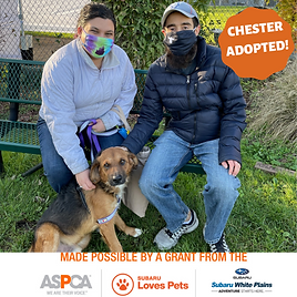 Chester adopted.png
