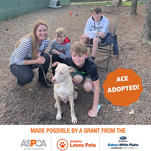 Ace adopted.png