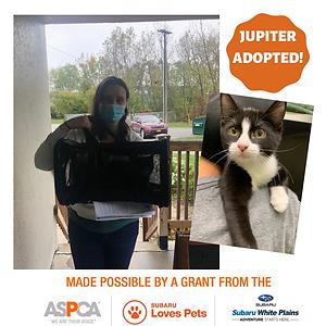 Jupiter Adopted.png
