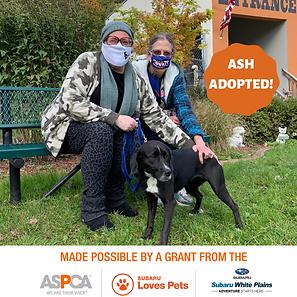 Ash adopted.png