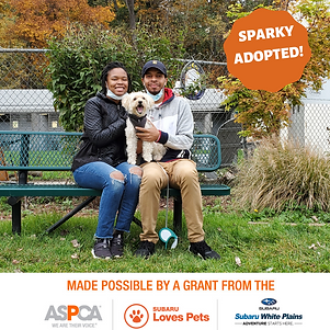Sparky adopted.png