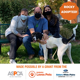 Rocky Adopted.png