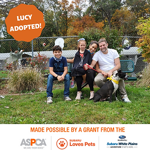 Lucy adopted.png