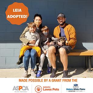 Leia adoption.png