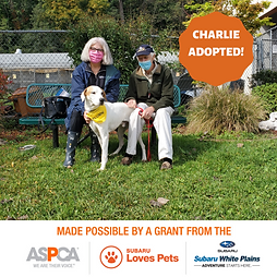Charlie Adopted.png
