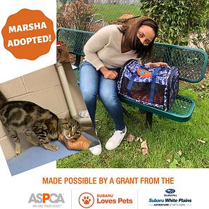 Marsha adoption.png