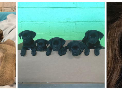A Plethora of Puppies Amidst a Pandemic