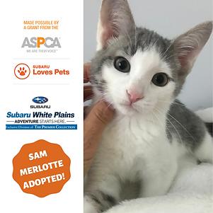 Sam Merlotte Adopted.png