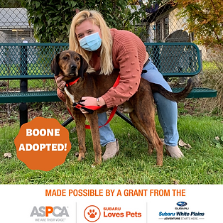 Boone adopted.png