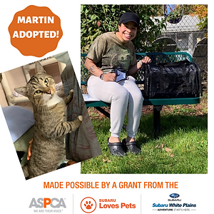 Martin adopted.png
