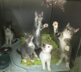Hollywood kittens.JPG