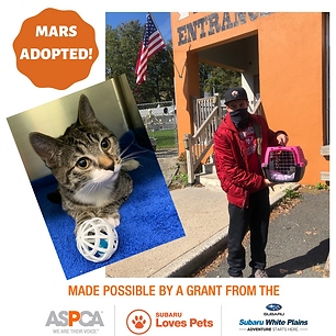Mars Adopted.png