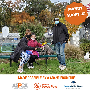 Mandy adopted.png