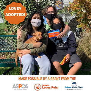 Lovey adopted.png