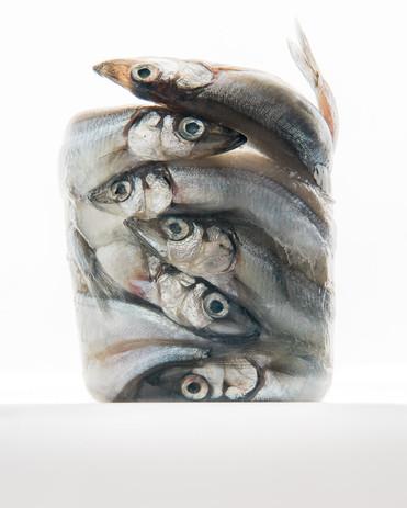 Fish Study #1