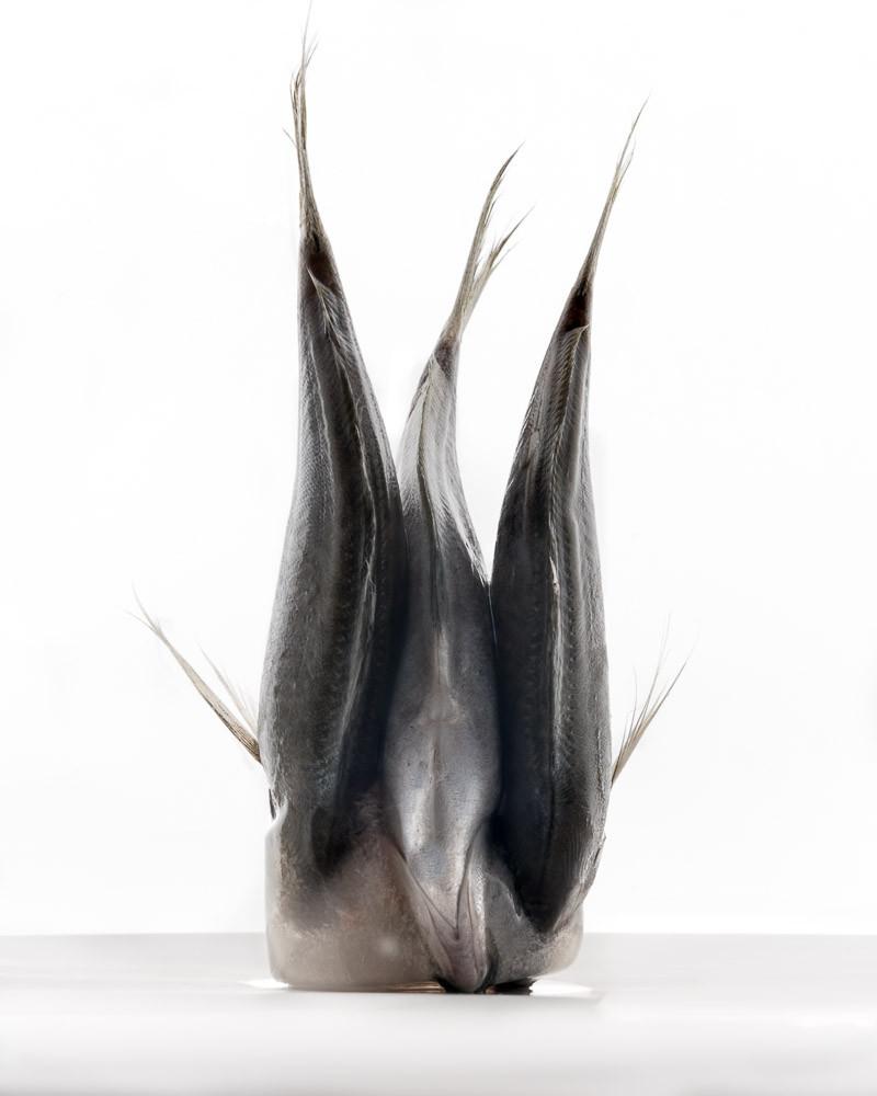 Fish Study #5