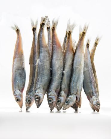 Fish Study # 3