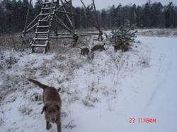 Hund-Kanzel-Winter