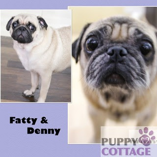 Fatty & Denny