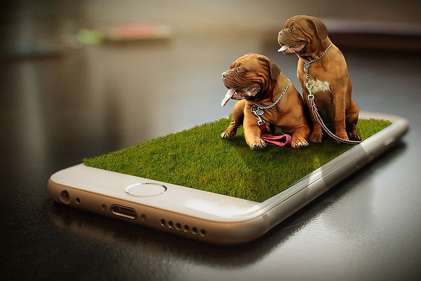 pet store, dog grooming, dog boarding