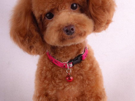 Certified Pet Care Technician & Certified Pet Dermatologist in Pet Shop Malaysia