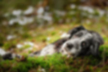 Border-Collie, Hundefotofrafie, Hundepotrait, Professionell, Dox-in-Focus, Koblenz