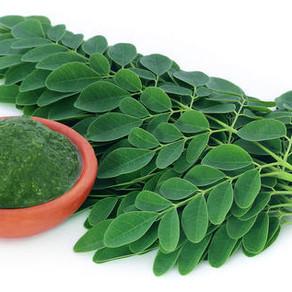 Health Benefits of Moringa Tea: