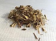 Licorice - Glycyrrhiza glabra .jpeg
