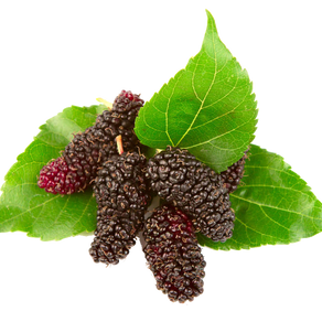 10 best Facts About mulberry tea
