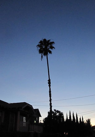 palm_silhouette.JPG