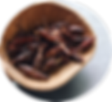 chapulines.png