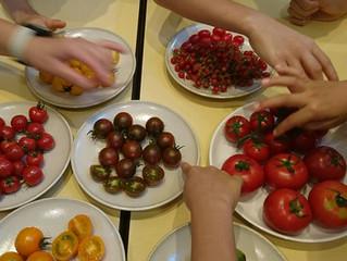 食育教室ふらここ トマト・トマト・トマト