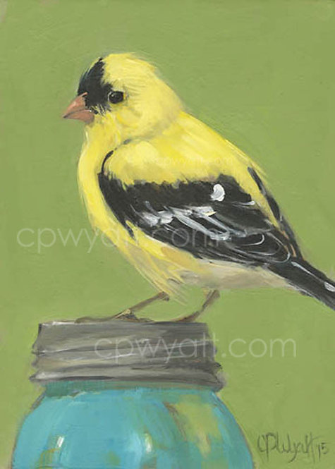 Birds In The Kitchen: Goldfinch