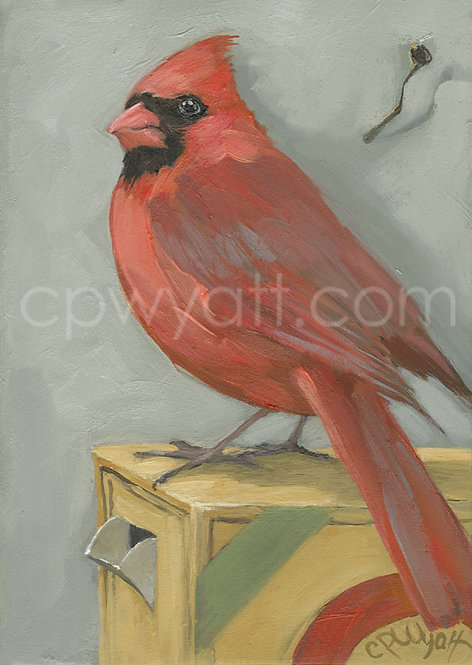 Birds In The Kitchen: Cardinal Male