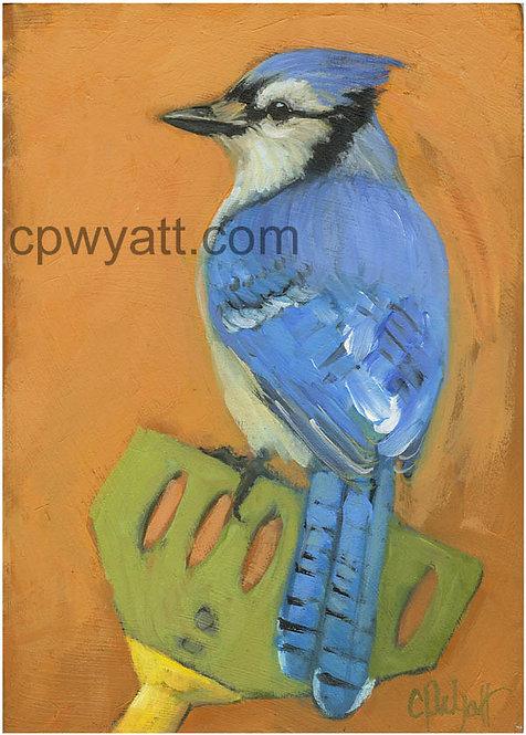 Birds In The Kitchen: Blue Jay