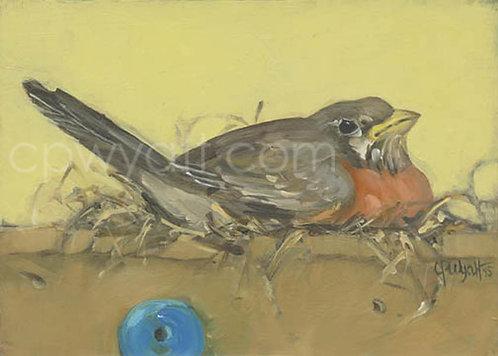Birds In The Kitchen: Robin