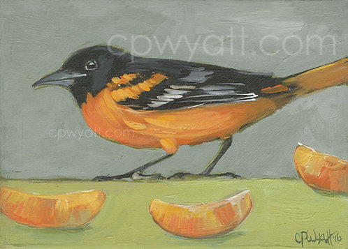 Birds In The Kitchen: Oriole