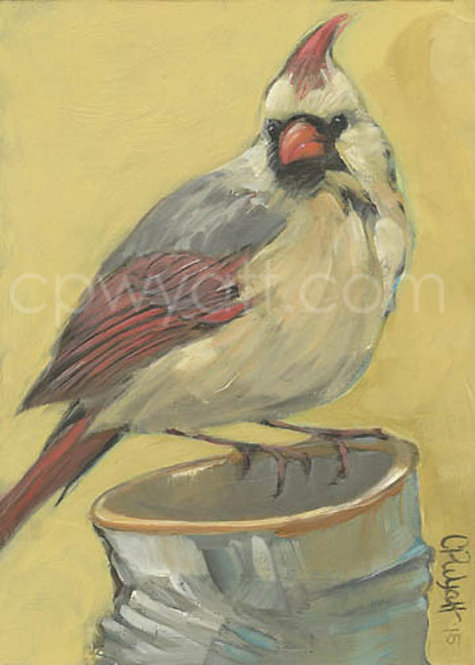 Birds In The Kitchen: Cardinal Female
