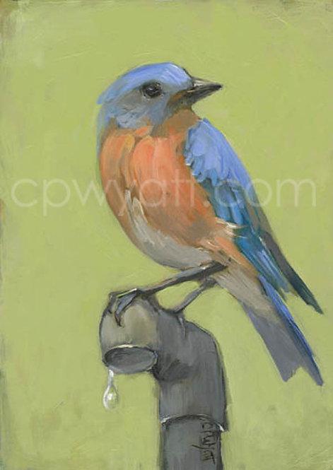 Birds In The Kitchen: Bluebird