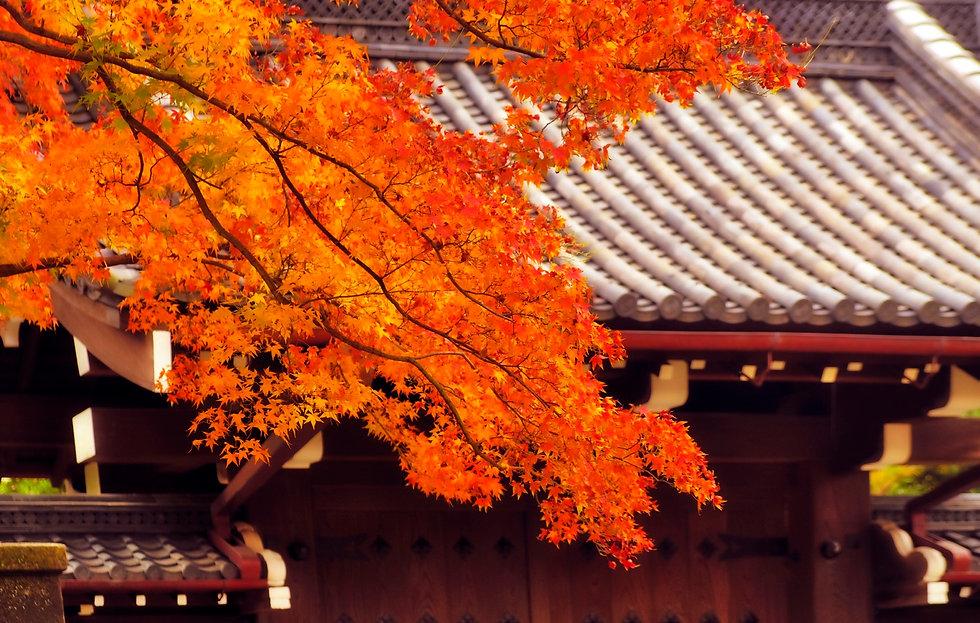 Tokyo Palace 5.jpeg