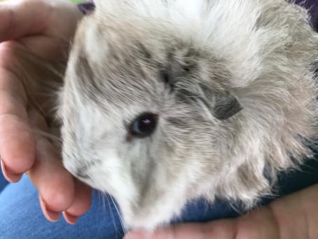 Puggsley the Piggie!