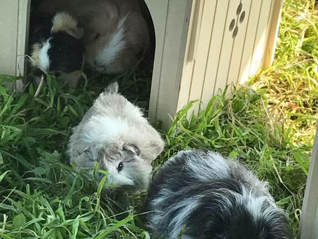 More Piggy Pics!