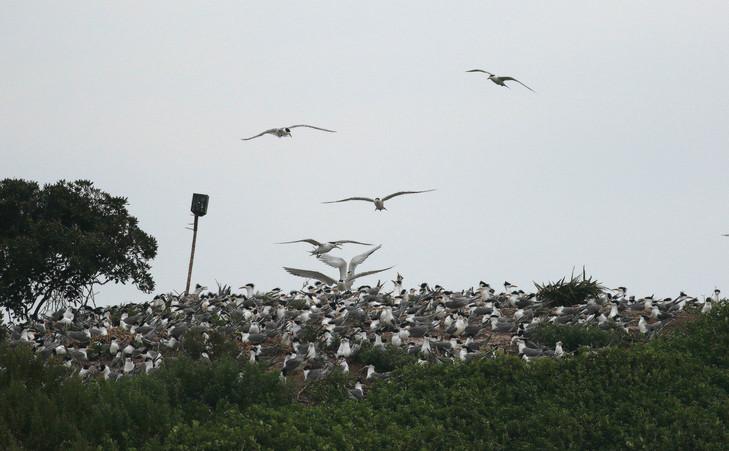 坤坵觀賞燕鷗