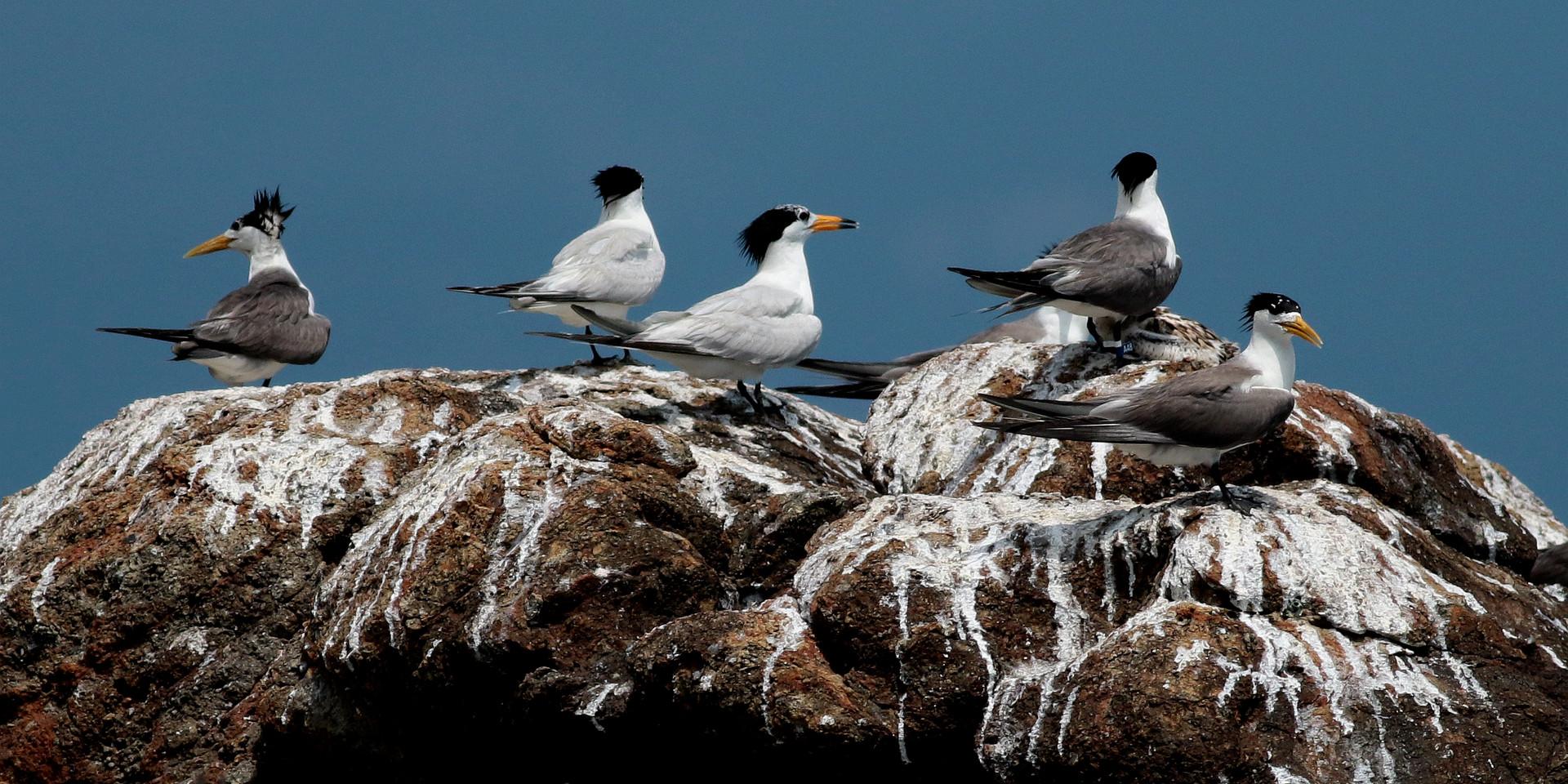 馬祖列島燕鷗保護區
