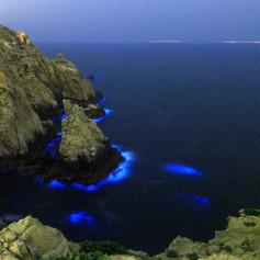 東洋山藍眼淚.jpg