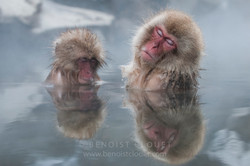 Macaques_09_07254