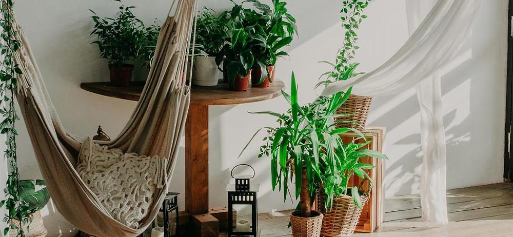 Plantas que não precisam de luz direta são ideais para aqueles cantinhos com mais sombra no apê